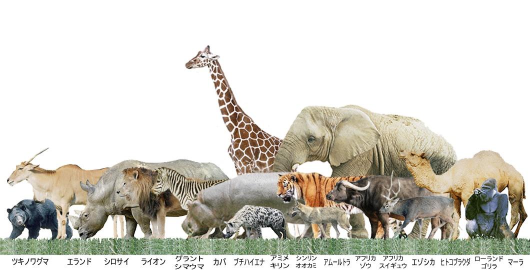 動物図鑑/動物の大きさの比較