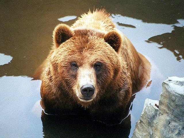 クマの画像 p1_2